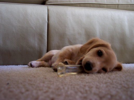 Chewing my bone