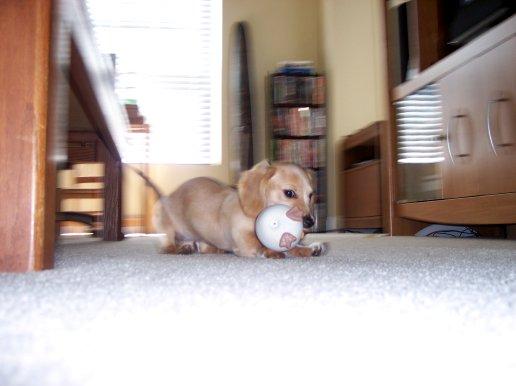Egg Baby action shot!