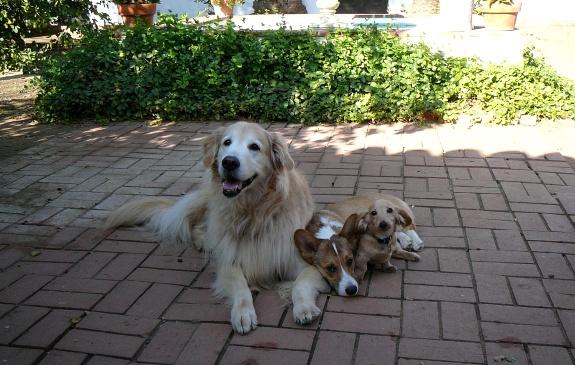 Doggies chillaxing in the courtyard